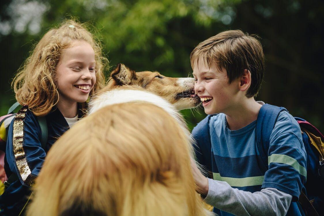 فیلم 2020 Lassie Eine abenteuerliche Reise